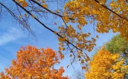 autumn-18175_640