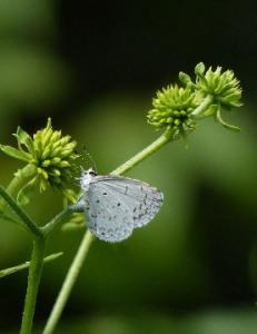 butterfly-983985_960_720