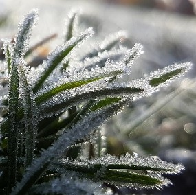 frost-1081682_960_720
