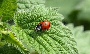 ladybug-349456__180