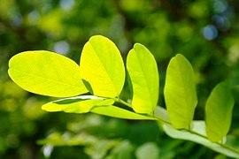 leaf-141494__180