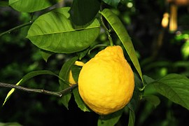lemon-289801__180