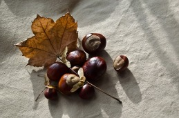 autumn-72195_640