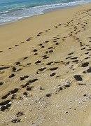 sand-beach-560855__180