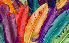 feather-886785_960_720