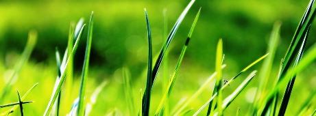 grass-724014_960_720